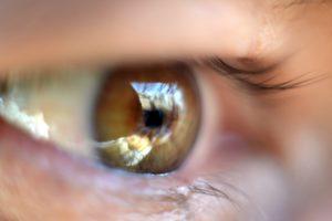 Палочки и колбочки сетчатки глаза: строение