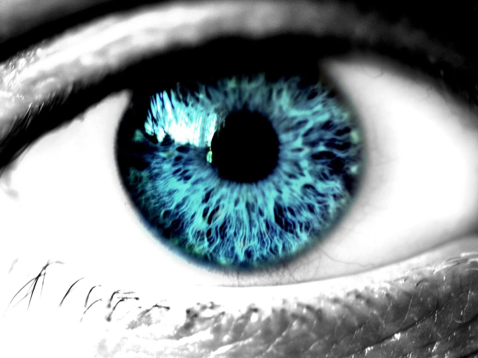 Строение роговицы глаза и ее значение