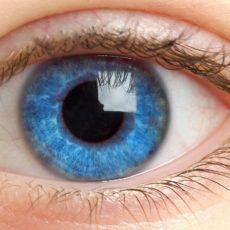 Конъюнктива - одна из оболочек глаза