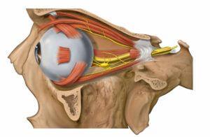 Глазодвигательный нерв