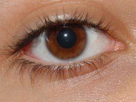 Вспомогательный аппарат глаза