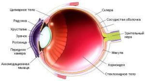 Иннервация глаза