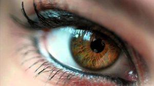 строение хрусталика глаза