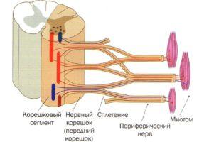 дисфункциональные нарушения и поражения глазодвигательного нерва