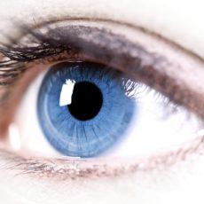 Цилиарное тело глаза еще назівают ресничным