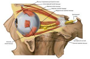 Какие мышцы блоковый нерв иннервирует, какова его анатомия и особенности
