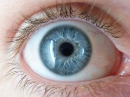 Функции стекловидного тела глаза