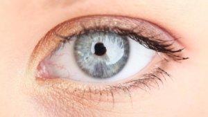 Строение век глаза, анатомия органов зрения