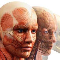 Мышцы глаза имеют сложную структуру
