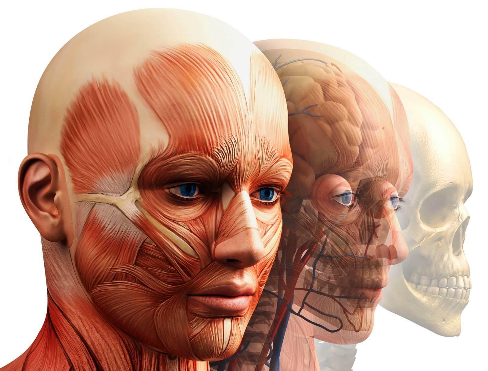Мышцы глаза: анатомия и возможные нарушения в их функционировании