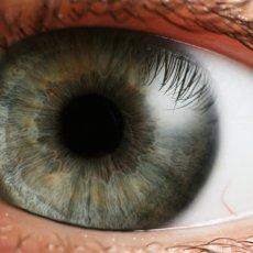 Хрусталик - важная часть глаза