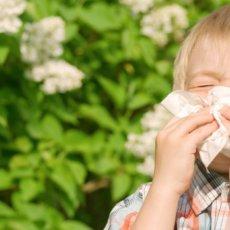 Аллергия - это своеобразная реакция организма