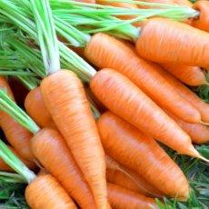 Морковь - полезный и вкусный корнеплод
