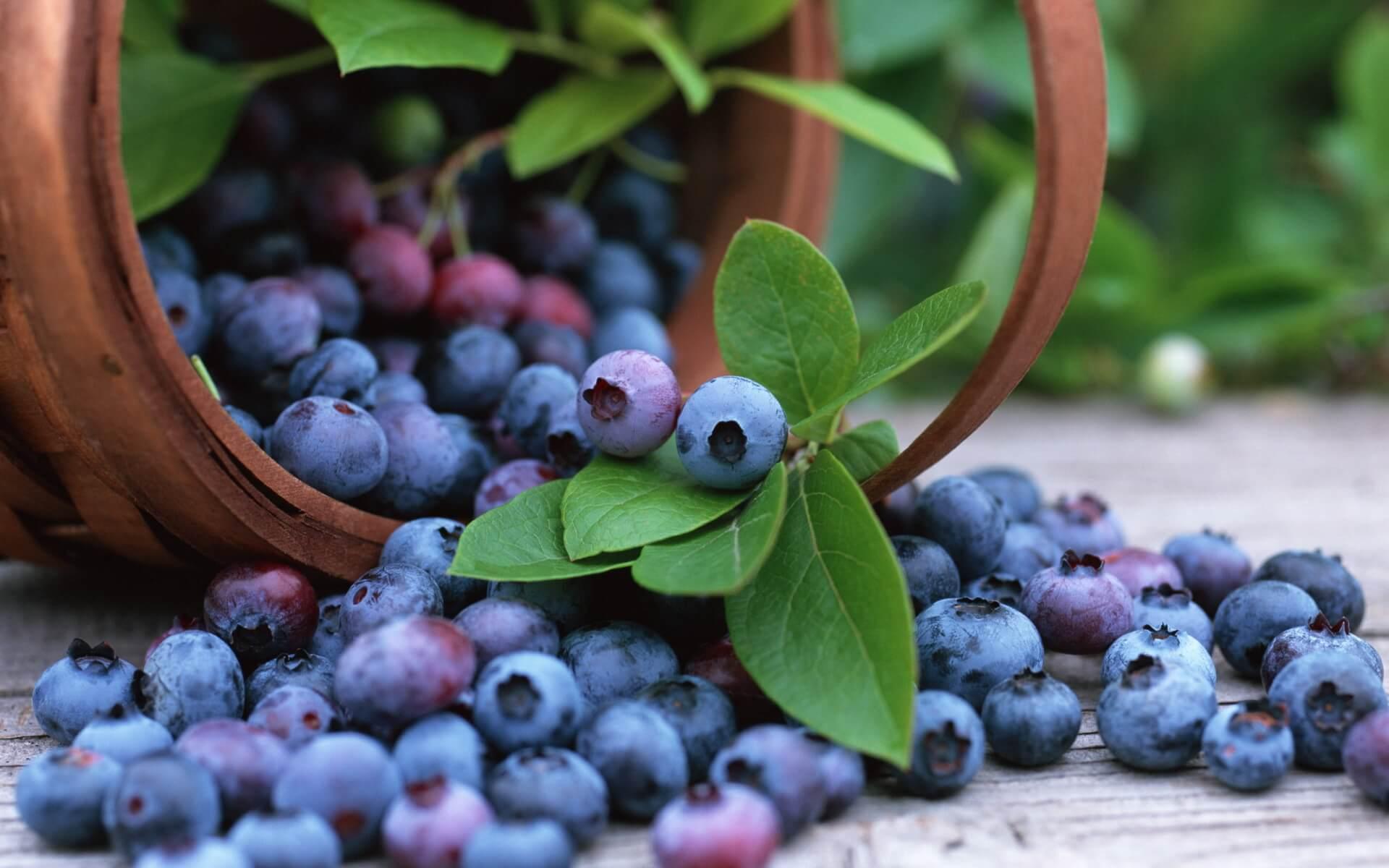 Ягода черника: полезные свойства и рецепты для оздоровления