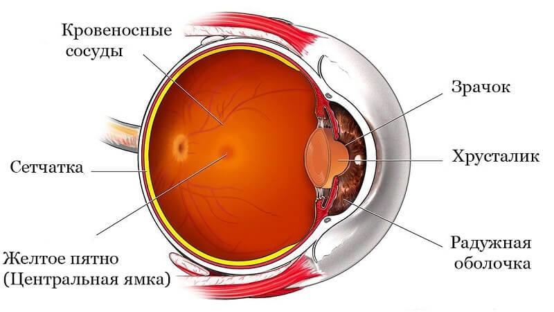 Ишемия сетчатки глаза: виды, симптоматика и лечение