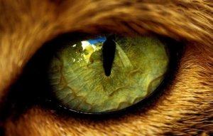 Кошачий зрачок у человека